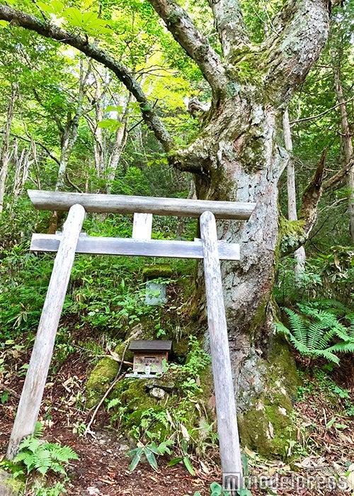 山ノ神(C)ビューティーガール