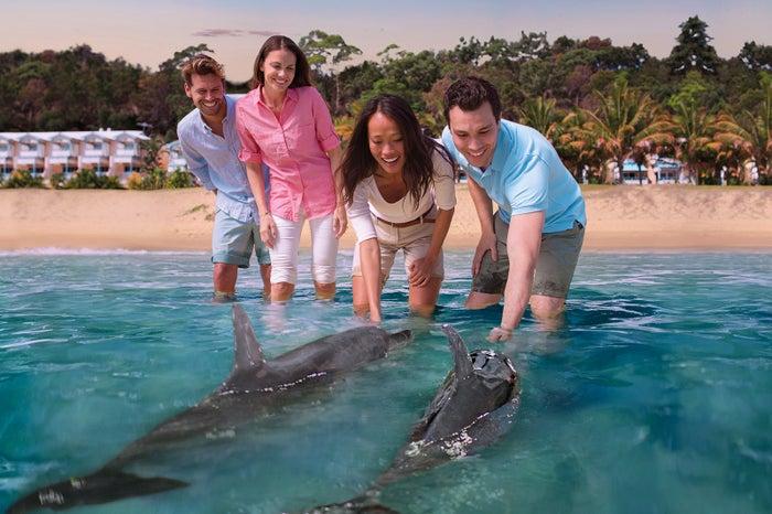 モートン島/野生のイルカに餌付けするレア体験もできる(提供画像)