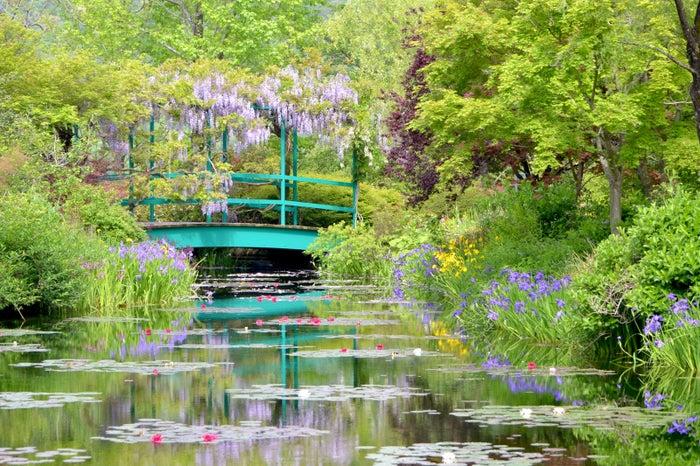 世界で2か所しかない美しい庭園「モネの庭」水の庭(高知)/提供写真