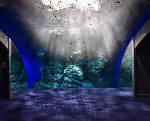イルカを眺めながら過ごせるカフェも♡2020年絶対行きたいおすすめ水族館