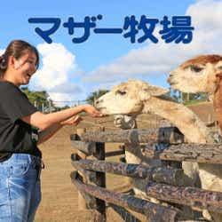 マザー牧場/画像提供:THE FARM
