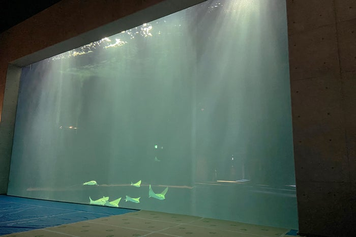 綿津見の景/画像提供:四国水族館開発