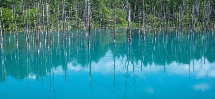 美瑛町の青い池/photo by ぱくたそ