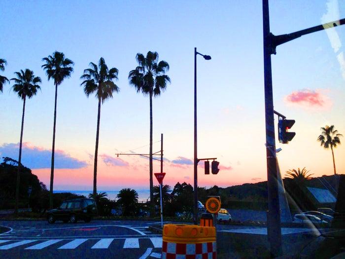 青島(提供写真)