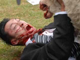 4,000万頭の怒れる殺人羊が襲い来る!ニュージーランド発の羊ホラー、ついに日本公開