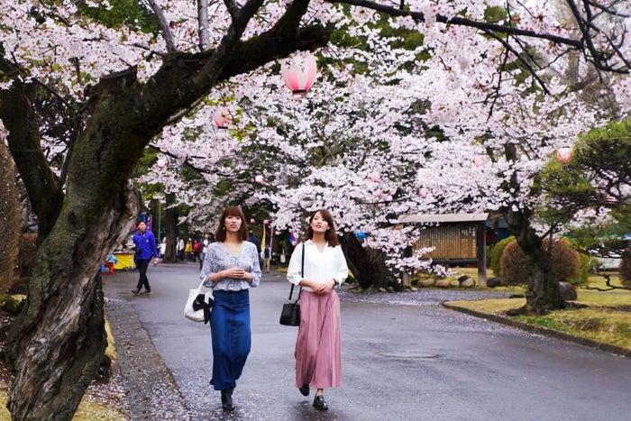 思川桜まつりでは各所でイベントが盛りだくさん/小山市