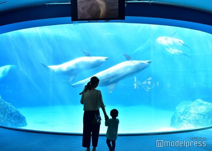 名古屋港水族館のイルカたち