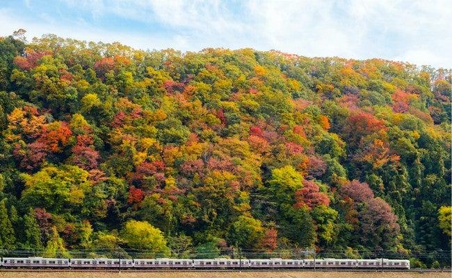 高尾山の紅葉と京王高尾線/画像提供:京王電鉄