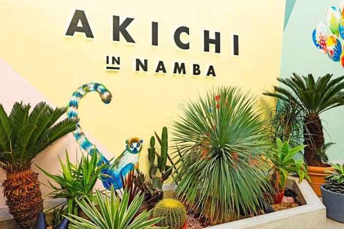 AKICHI/画像提供:ドロキア・オラシイタ
