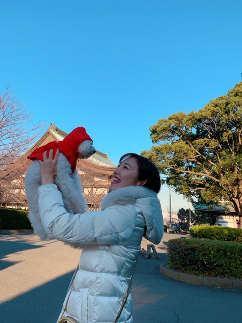 真っ白な愛犬: 多夢(たむ)は、癒しです♪/小澤陽子アナウンサー(提供写真)