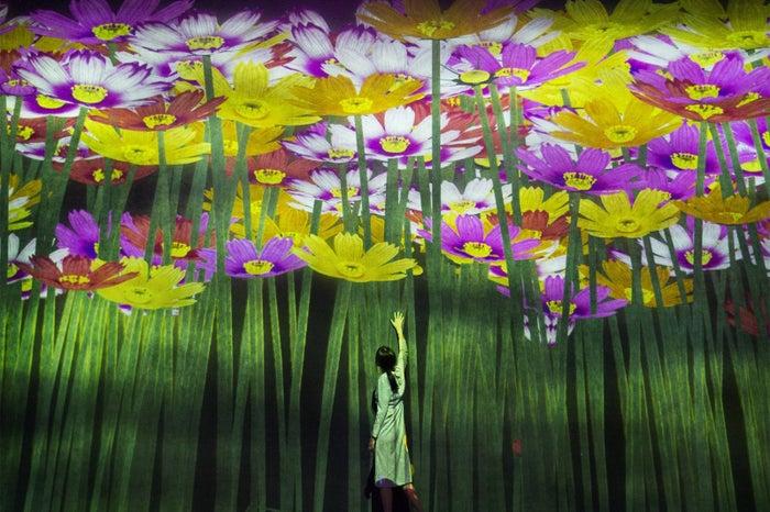 花の精霊/画像提供:チームラボ