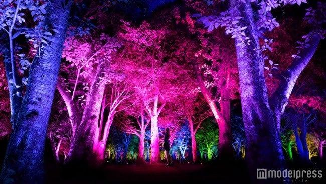 光と音色が響き渡るアート空間「呼応する森」が幻想的/呼応する森/Resonating Forest/画像提供:チームラボ