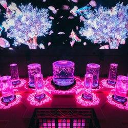 アートアクアリウム美術館「桜金魚 舞い泳ぐ」春限定演出が初開催