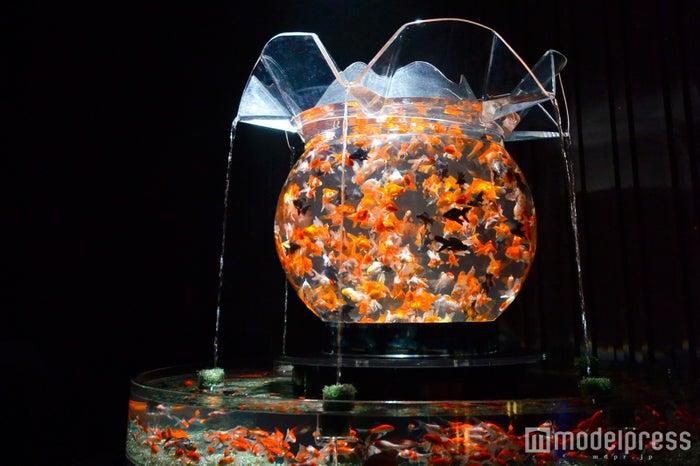 花魁/巨大金魚鉢「Oiran」/画像提供:アートアクアリウムPR事務局