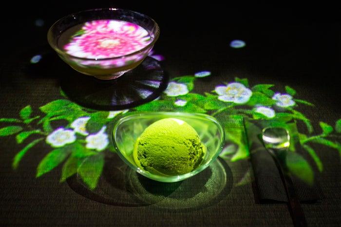 茶の木/Tea flowers /画像提供:チームラボ