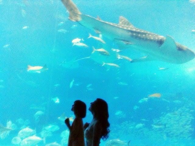 美ら海水族館(提供写真)