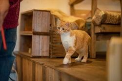 心がほっこり♡茶トラの子猫が教えてくれた優しい気持ちとは?
