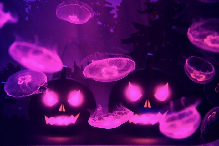 万華鏡トンネル内のミズクラゲ水槽/画像提供:すみだ水族館