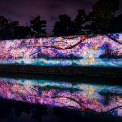 NAKED FLOWERS 2021 −桜− 世界遺産・二条城/画像提供:ネイキッド