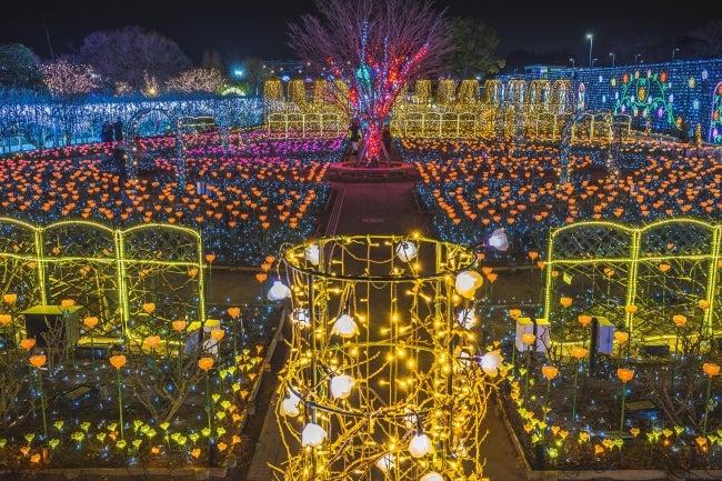 Flower Fantasy~光の花の庭2019~/画像提供:足利フラワーリゾート