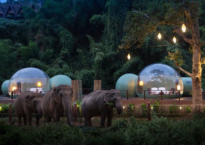 「ジャングルバブル(Jungle Bubble)」/画像提供:Anantara