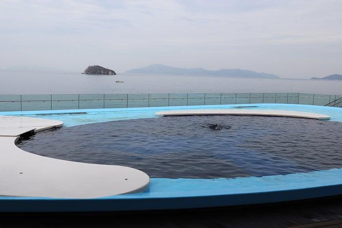 イルカプール/画像提供:四国水族館開発