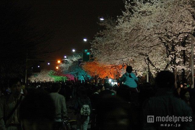 汝矣島の「春の花祭り」の夜間ライトアップ/photo by Abri_Beluga