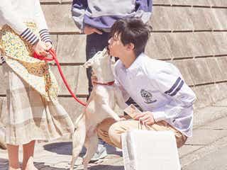 """北村匠海・小松菜奈・吉沢亮、""""愛犬サクラ""""と戯れるメイキングカット解禁<さくら>"""