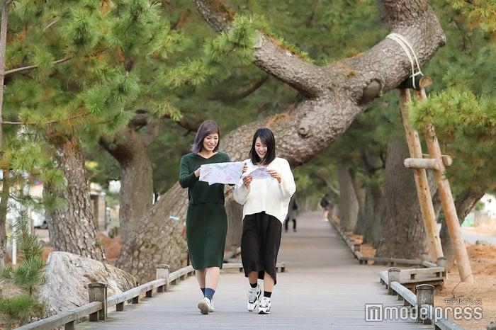 立派な松の木がそびえる、通称「神の道」と呼ばれる松並木。(C)モデルプレス