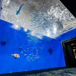 外洋水槽/提供画像