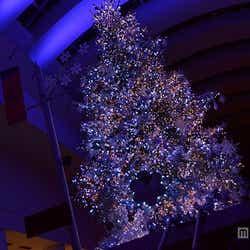 ミラクルツリー点灯式の様子