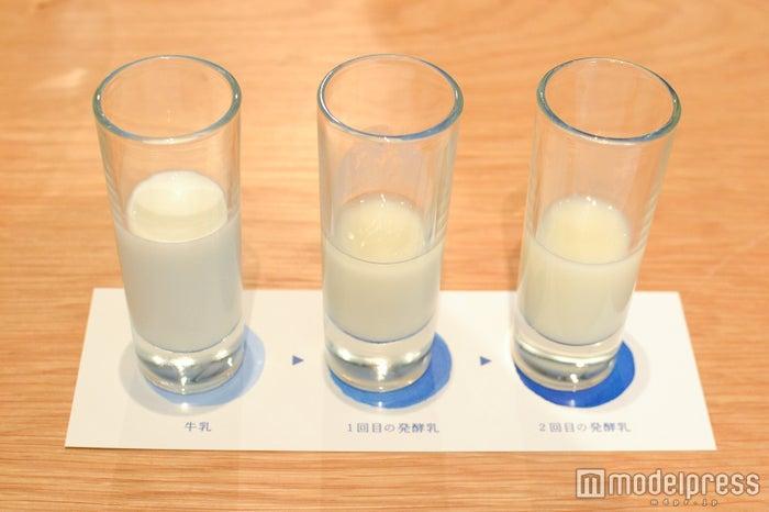 「カルピス」製造工程の途中段階、発酵乳の飲み比べも(C)モデルプレス