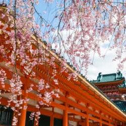 桜と一緒にアートも楽しめる♡『平安神宮』周辺のお花見&おでかけスポット