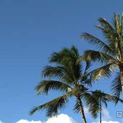 ハワイの風景/画像提供:毎日放送