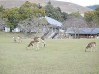 ゆったり奈良にぶらり旅。マストで行くべきな「春日野園地」とは