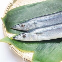【秋刀魚の旬】おいしい食べ方と鮮度の見分け方を知って味わいつくそう