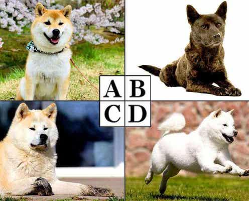 性格心理テスト あなたの魅力がわかる!日本犬診断
