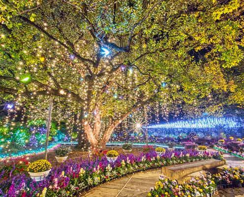 あしかがフラワーパーク「光の花の庭~Flower Fantasy2021~」500万球輝く花と光の芸術