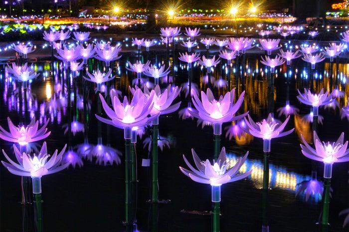 光の睡蓮/画像提供:足利フラワーリゾート