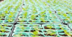 兵庫県の育苗農家「文化農場」の野菜苗の即売(提供写真)