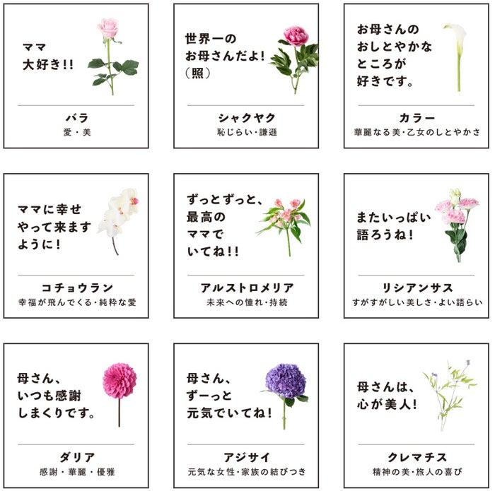 5月に旬を迎える16種類の花を紹介