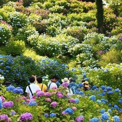 「小田原城あじさい花菖蒲まつり」梅雨を彩る花の競演&夜間ライトアップも