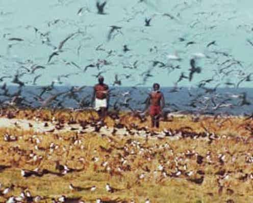 没後10年!『世界残酷物語』など残酷三部作収録「ヤコペッティ残酷BOX」12月発売