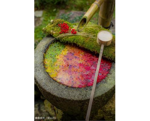 京都で発見された小さな秋の絶景が話題 「グラデーションがすごい…」