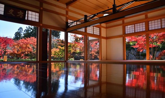 秋の床もみじ/画像提供:宝徳寺