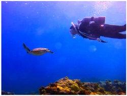 ウミガメと泳ぐ平祐奈/平祐奈オフィシャルブログ(Ameba)より