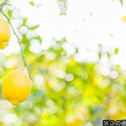 西郷輝彦『鶴瓶の家族に乾杯』22年ぶりに出演!レモンの木の下でビールを飲みたいと愛媛へ