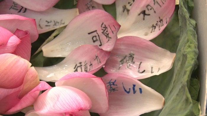 たかがゆめちんの良いところを書いた花びら/「あいのり:Asian Journey」第4話より(C)フジテレビ