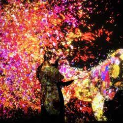 花の森で生まれ、 花と共に生きる動物達/画像提供:チームラボ