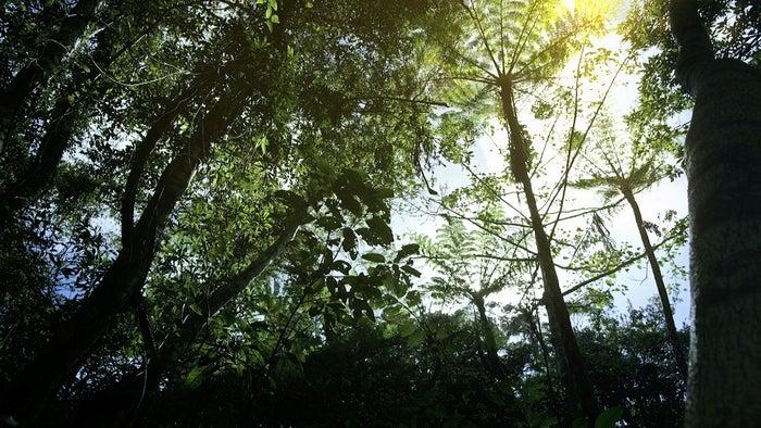 亜熱帯雨林の美しい映像も/「大自然への挑戦:有村架純<沖縄の亜熱帯雨林編> 」より